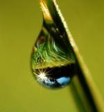 diamond sutra drop of dew